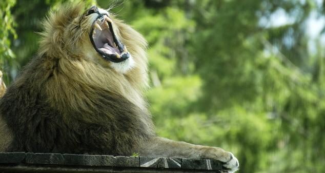 svensk  lejon massage i borås